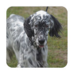 Beautiful English Setter Dog Coaster