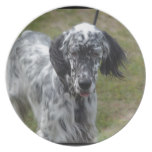 Beautiful English Setter Dog Melamine Plate