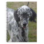 Beautiful English Setter Dog Notebook