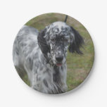 Beautiful English Setter Dog Paper Plate