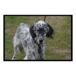 Beautiful English Setter Dog Poster