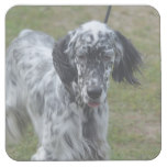 Beautiful English Setter Dog Square Paper Coaster
