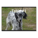 Beautiful English Setter Dog Table Number