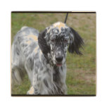 Beautiful English Setter Dog Wooden Coaster