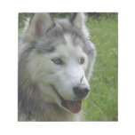 Beautiful Siberian Husky Puppy Dog Notepad
