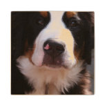 Bernese Mountain Dog Breed Wood Coaster