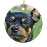 Black and Brown Chihuahua  Ornament