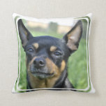 Black and Brown Chihuahua Pillow
