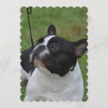 Black and White French Bulldog Invitation
