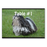 Black and White Puli Dog Card