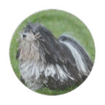 Black and White Puli Dog Paper Plate