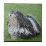 Black and White Puli Dog Tile
