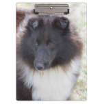 Black and White Sheltie Clipboard