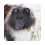 Black and White Sheltie Drink Coaster