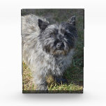Black Cairn Terrier Award