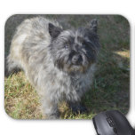 Black Cairn Terrier Mouse Pad