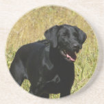 Black Lab in Field Coaster