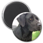 Black Labrador Retriever Round Magnet