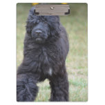 Black Portuguese Water Dog Clipboard
