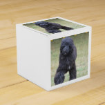 Black Portuguese Water Dog Favor Box