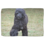 Black Portuguese Water Dog Hand Towel