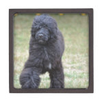 Black Portuguese Water Dog Jewelry Box