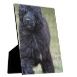 Black Portuguese Water Dog Plaque