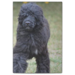 Black Portuguese Water Dog Post-it Notes