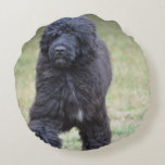 Black Portuguese Water Dog Round Pillow