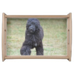 Black Portuguese Water Dog Serving Tray