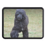 Black Portuguese Water Dog Tow Hitch Cover