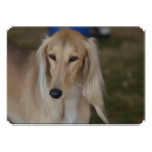 Blonde Saluki Dog Card