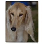 Blonde Saluki Dog Plaque