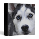 Blue Eyed Husky Binder