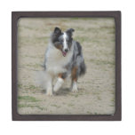 Blue Merle Australian Shepherd Jewelry Box