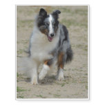 Blue Merle Australian Shepherd Temporary Tattoos