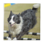 Border Collie Agility Tile