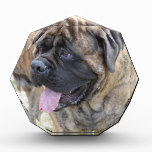 Brindle Mastiff Acrylic Award