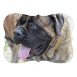 Brindle Mastiff Card