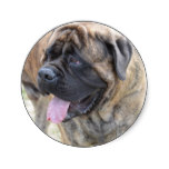 Brindle Mastiff Classic Round Sticker