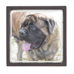 Brindle Mastiff Jewelry Box