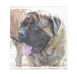 Brindle Mastiff Notepad