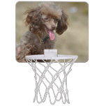 Brown Toy Poodle Mini Basketball Hoop