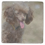 Brown Toy Poodle Stone Coaster