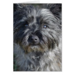 Cairn Terrier Dog Card