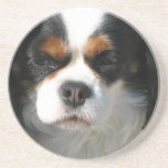 Cavalier King Charles Spaniel Dog Coaster