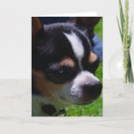 Chihuahua Pup Greeting Card