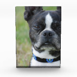 Classic Boston Terrier Dog Award