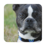 Classic Boston Terrier Dog Beverage Coaster