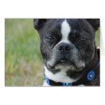 Classic Boston Terrier Dog Card